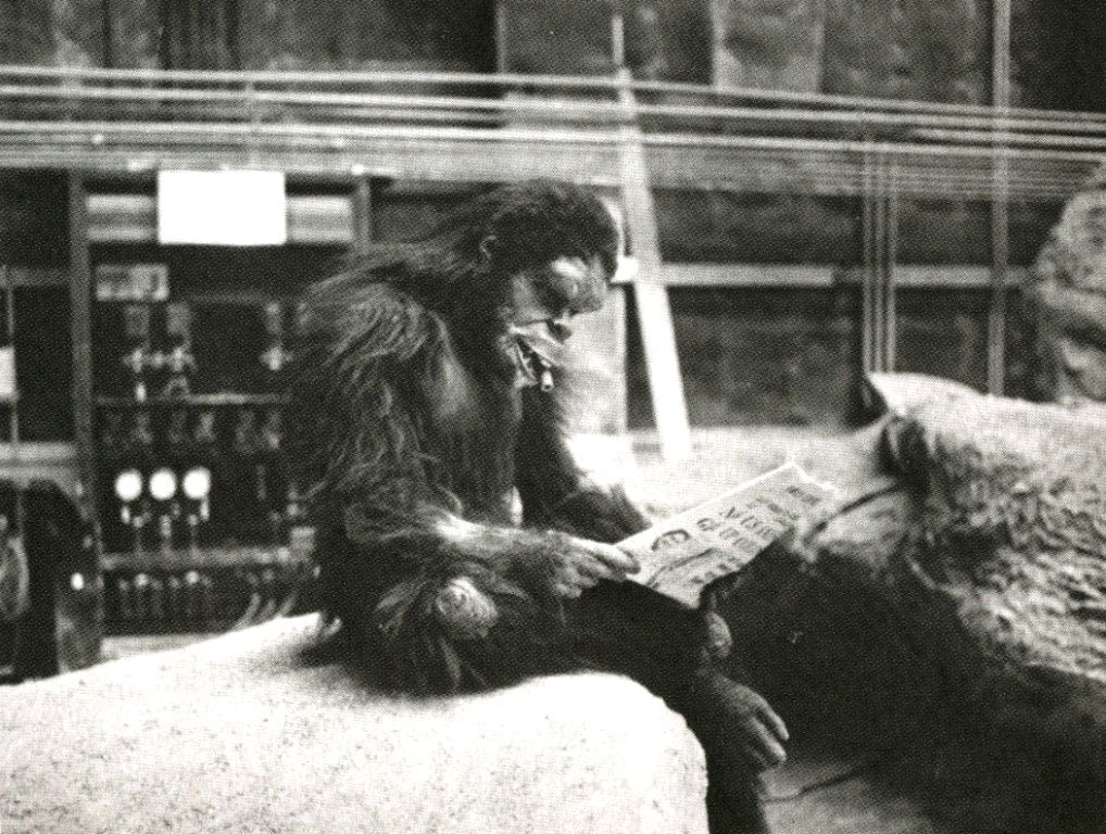 Monkey reading the paper